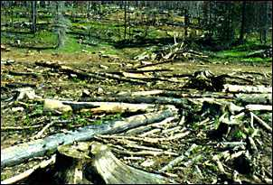 Photo: Salvage Logging