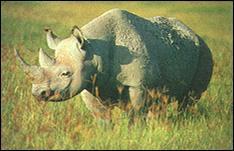 Rick Weyerhaeuser/World Wildlife Fund
