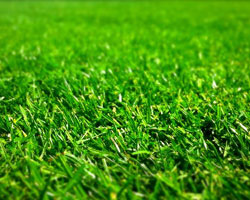 Are Lawns Worse than Corn Fields?