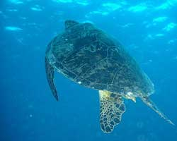 Drilling Threat to Great Barrier Reef
