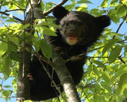 Saving Bears in China