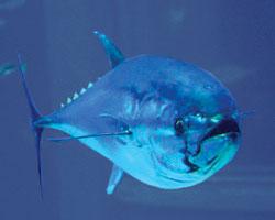 Radioactive Tuna