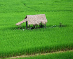 Rice Paddies have a Methane Problem