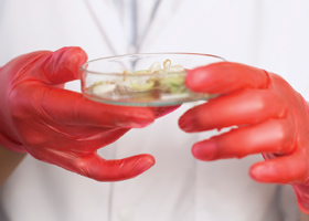 GMO labelling © iStockphoto