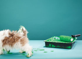 greener pet care