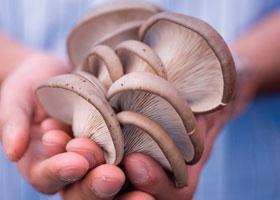 home-grown mushrooms