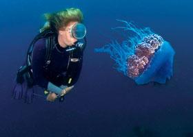 jellyfish © Thinkstock