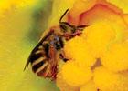 bee keeper © USDA