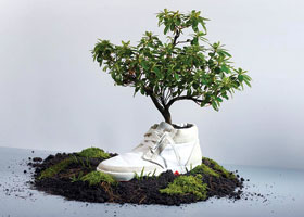 greener sneakers