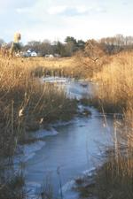 Salt Marsh SOS