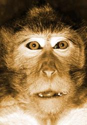 Internet Trade in Exotic Animals Threatens Endangered Species