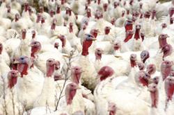 Talking Turkey about Biofuels