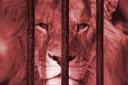 Thailand's Booed Zoo
