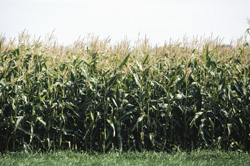 New Study Throws Doubt on the Benefits of Ethanol