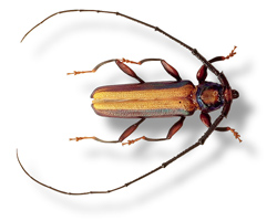 Invasive Species: The Latest Homeland Security Threat?