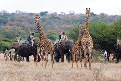 Camp Jabulani allows eco-travelers to take elephant-back safari tours of the local wildlife. © Courtesy of Camp Jabulani
