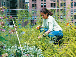 Learning from Green Roofs A Bronx School's Lesson in Saving Energy