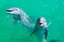 Marine Biologists Join Forces Against Japan's Inhumane Dolphin Drive