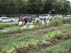 Street Beets Urban Farmers Get Hip to Growing