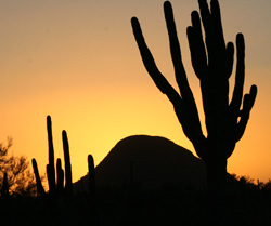 Defending Great Places Sonoran Desert at the Forefront of Geotourism