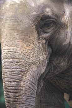 COMMENTARY: Do Elephants Cry?