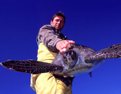 Real Men Don't Eat Turtle Eggs To Fight Turtle Poaching, Campaigners Hit Below the Belt