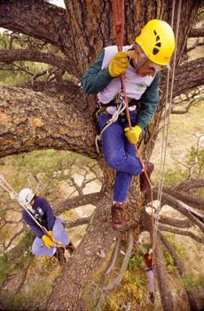 COMMENTARY: Climb a Tree!