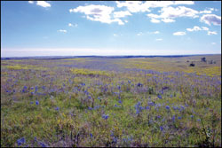 Restoring The Prairie