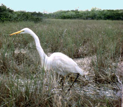 UN Removes Everglades from World Heritage List