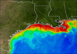 Gulf Dead Zone Grows With Ethanol Demand