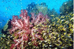 Save the Coral Triangle
