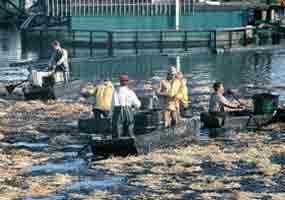 Santa Barbara oil spill, © Bob Dunkin, nacnud34@cox.net