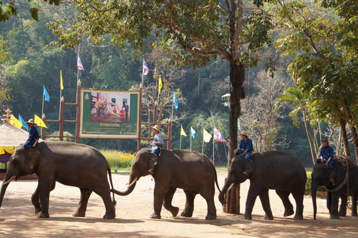 Thai elephant, credit: Stefan Maurer, FlickrCC