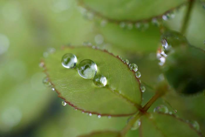 Rain Garden, Takashi .M, FlickrCC