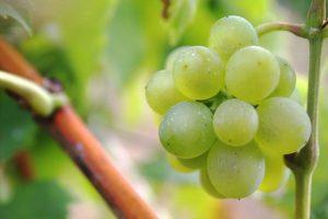 wine pesticides, credit: tribp, flickrcc