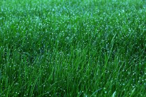 lawn 300x200 Tips for Helping Your Lawn Survive the Winter