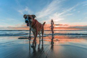 pets and pet care. credit: Jacub Gomez, Pexels
