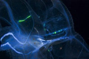 harnessing bioluminescence