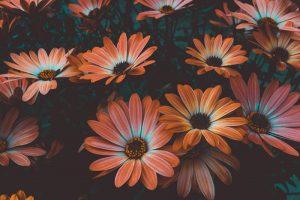 flowers-cut