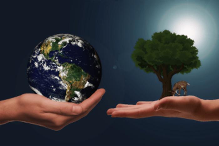 hand earth tree
