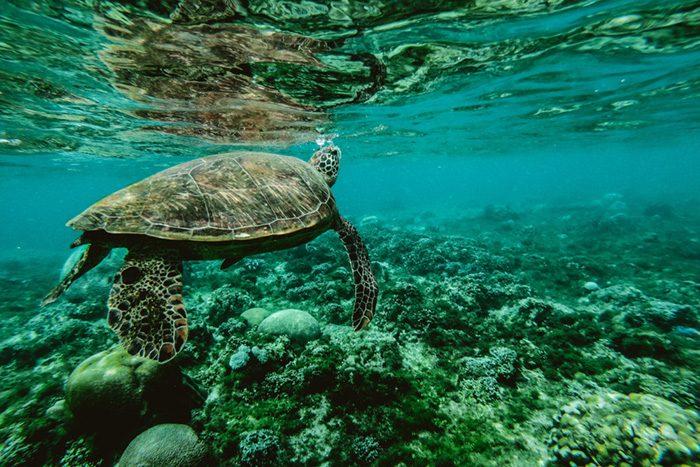 coral okinawa