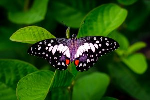 butterfly repose
