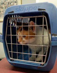 pet transportation costs