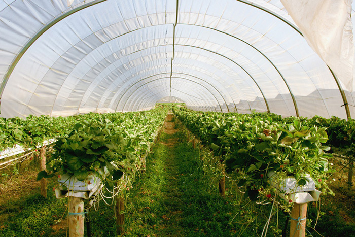 Sustainable Greenhouse Gardening