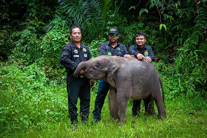 WRU & elephant