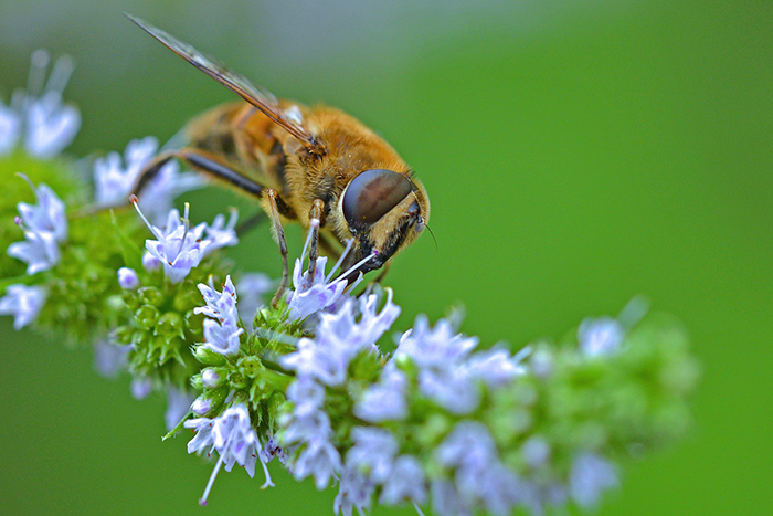 bee lawn. credit: simon, flickrCC