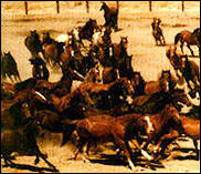 Wild mustangs were regularyly sent to places like this, but a recent agreement may stop the killing. Photo: Animal Protection Institute