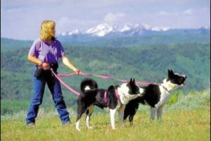 Using Dogs to Save Bears