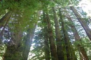 Air Bubbles Threatening Forests