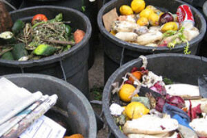 Mountains of Food Waste